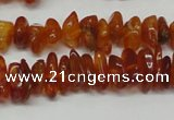 CAR115 16 inches 3*6mm - 4*8mm natural amber chips beads