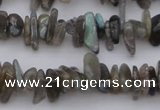 CCH646 15.5 inches 4*10mm - 6*14mm labradorite chips beads