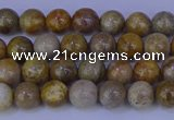 CFC200 15.5 inches 4mm round fossil coral beads wholesale