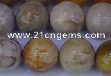 CFC205 15.5 inches 14mm round fossil coral beads wholesale