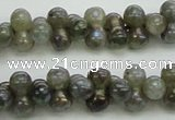 CLB630 15.5 inches 4*9mm bone AB-color labradorite beads