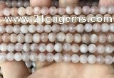 CMS1671 15.5 inches 6mm round moonstone beads wholesale