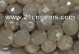CMS44 15.5 inches 10mm faceted coin moonstone gemstone beads