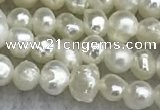 FWP11 14.5 inches 2.8mm potato white freshwater pearl strands